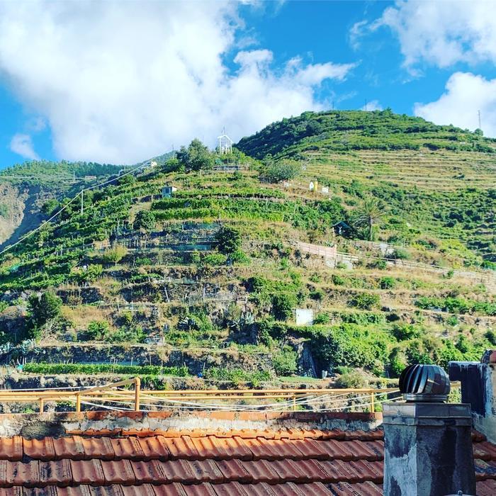 義大利馬納羅拉小鎮的一處葡萄園