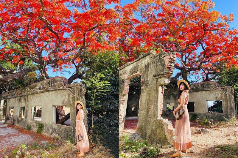 高雄大湖番茄會社被譽為最美廢墟花海,廢棄古厝與百年鳳凰木形成超人氣景點。圖/IG@yunshow120授權