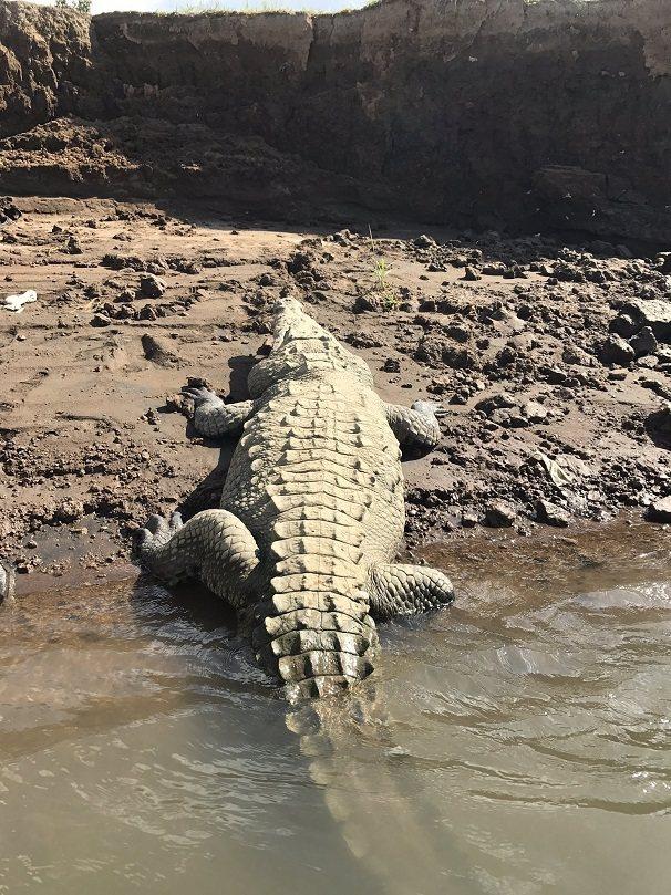 奧薩瑪肆虐烏干達的維多利亞湖畔多年,野生動物部門2005年找來50名當地男子後設...