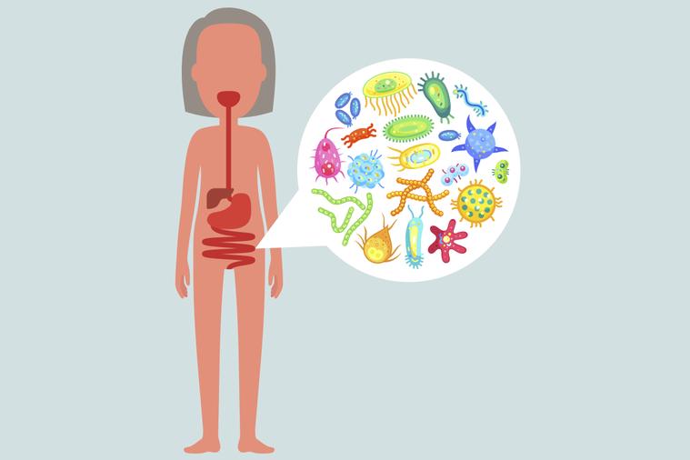 腸黏液是保護層,科學家呼籲為了確保腸道菌不吃腸黏液,重要的是供給足夠的高纖維飲食...