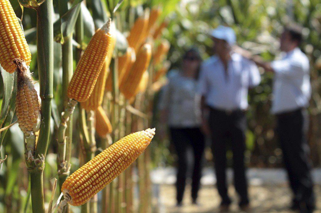 巴西是糖、黃豆和高級阿拉比卡咖啡豆的第一大出口國,也是第二大玉米出口國,僅次於美...