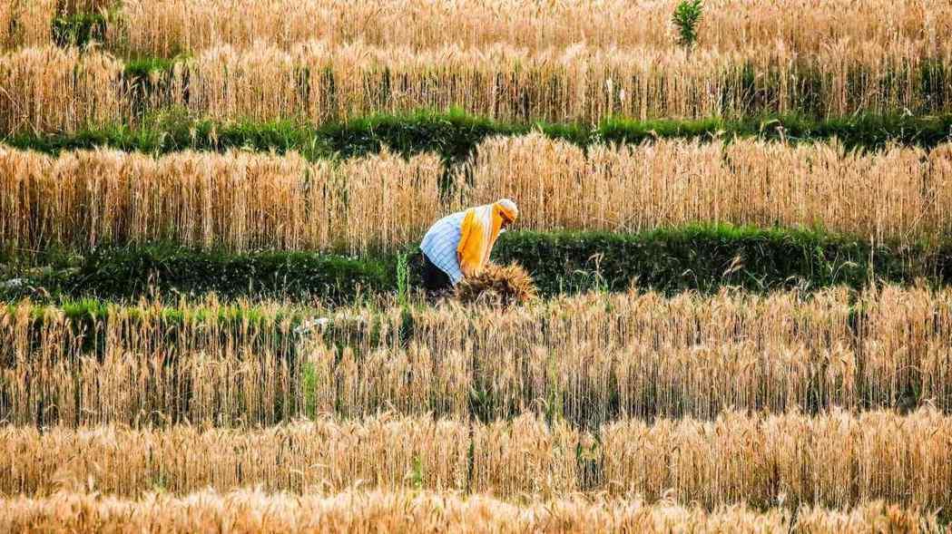 農產品價格不斷飆升,同時衝擊亞洲消費者和企業。路透