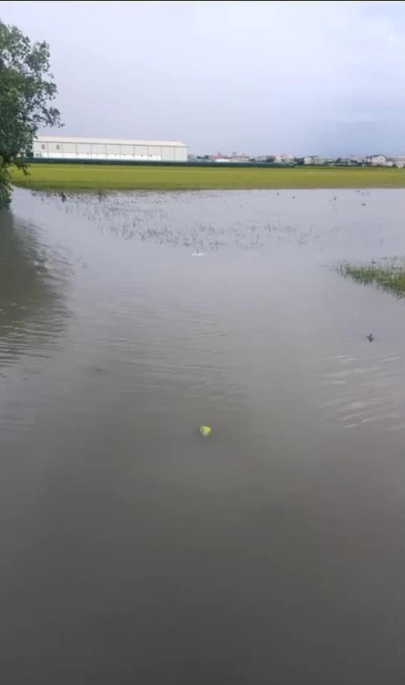 路被水淹沒,菜跟著滅頂,對農民來說,菜價好也沒用。圖/台灣農業監督團隊提供