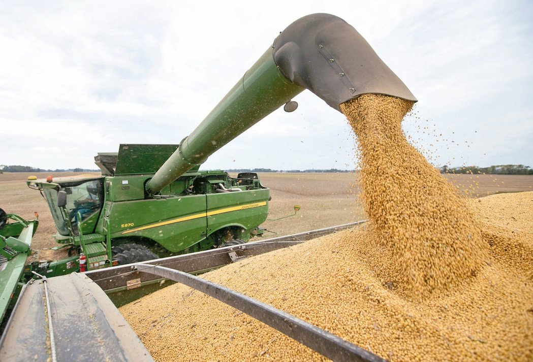 大陸前五個月糧食進口量年增50.6%,進口最多的糧食就是大豆。圖為美國大豆收成的...