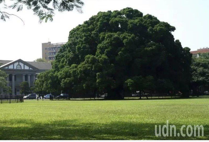 成功大學著名的榕園。本報資料照片