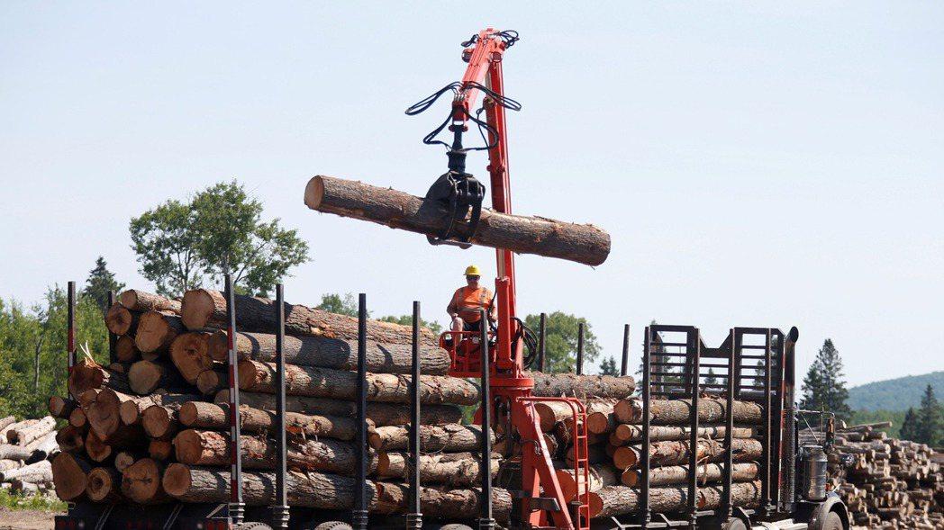 木材期貨價格從5月高點迄今已崩跌40%。(路透)