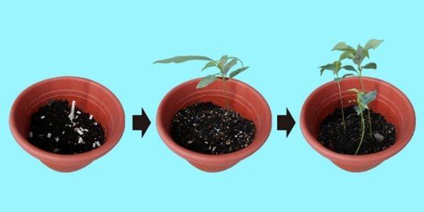 竹粉吸管採用生物全分解複合材料,其全天然的分解過程。 世農新材料/提供