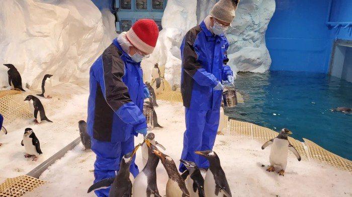 飼育企鵝。 圖/KLOOK