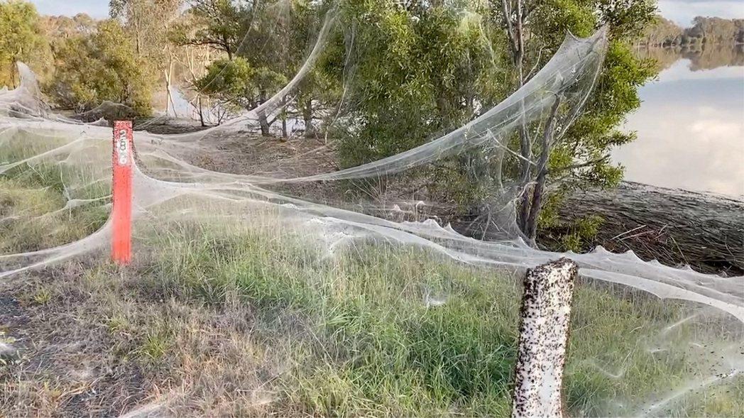 澳洲維多利亞省東部的吉普斯蘭地區最近降下連日大雨,隨後又引發洪災,往高處逃難的大...