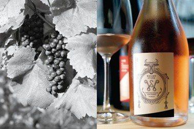左:黑后葡萄。右:威石東酒莊GrisdeNoirs淡粉紅氣泡酒。 圖/積木文化提供