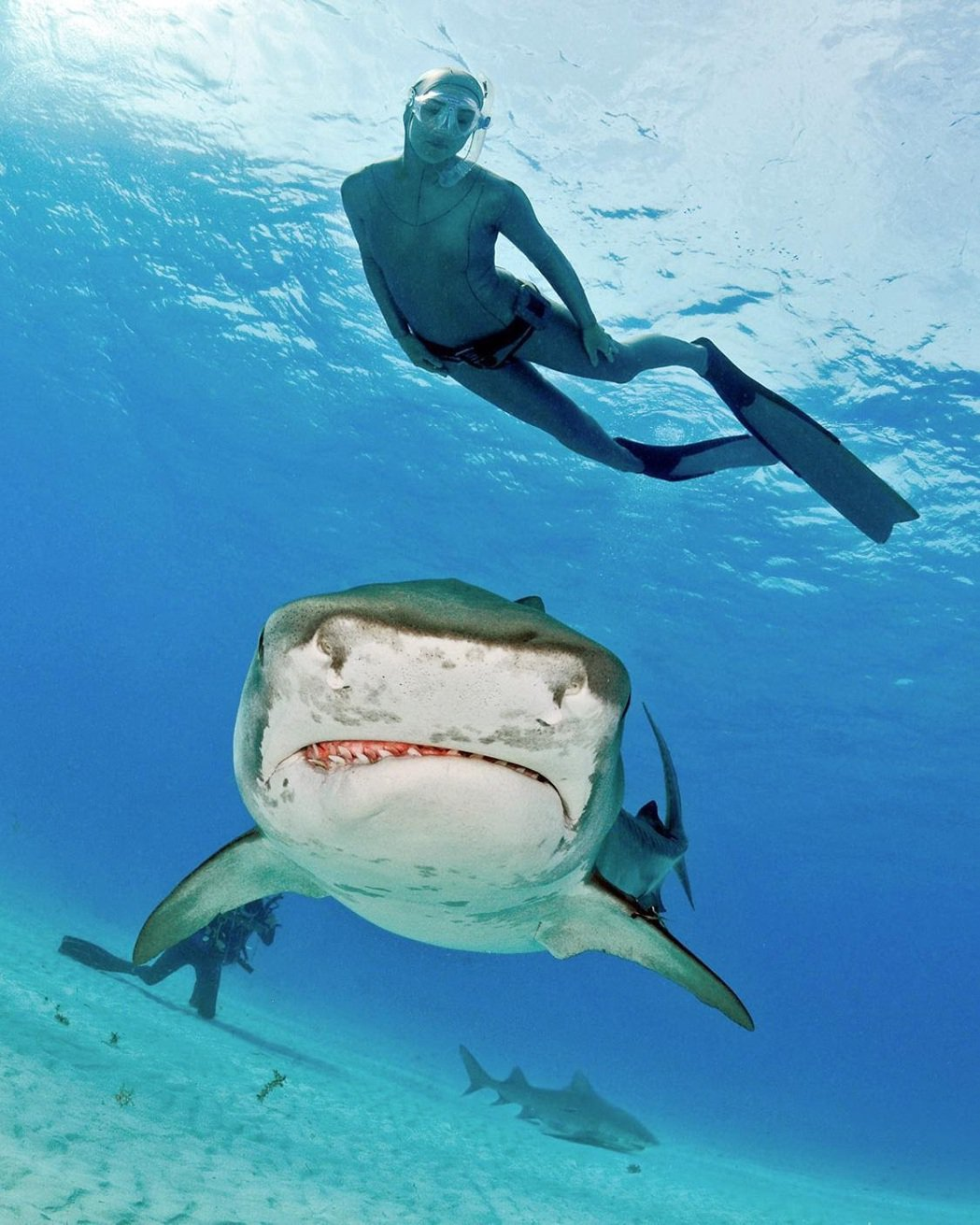 鯊魚專家 Lesley 會將她跟鯊魚相處的 20 年經驗全部傳授給你,從跟鯊魚對...
