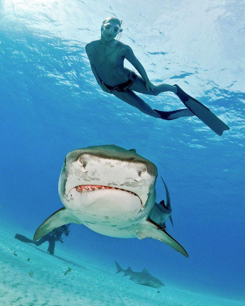 鯊魚專家 Lesley 會將她跟鯊魚相處的 20 年經驗全部傳授給你,從跟鯊魚對話開始,一步步揭開鯊魚的神秘面紗。 圖/Airbnb提供