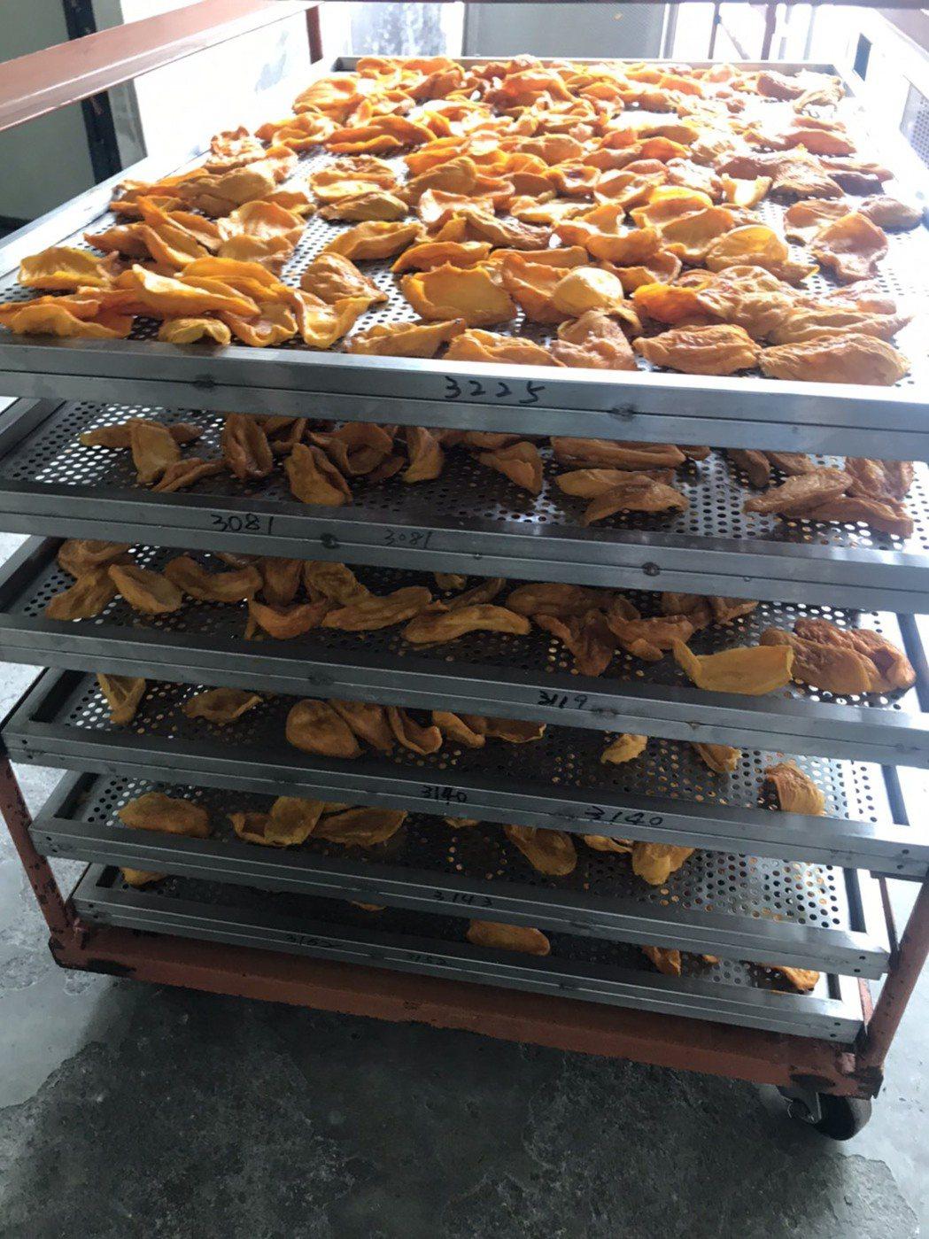 台南市山上區農會提前啟動愛文芒果乾烘製加工。圖/山上區農會提供