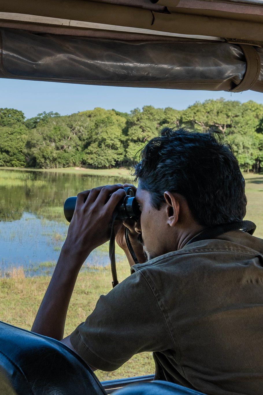 到斯里蘭卡觀賞野生花豹。 Airbnb /提供