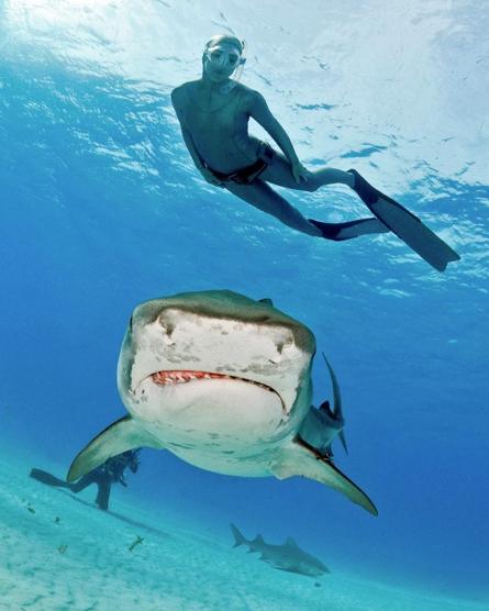 與鯊魚專家一起潛入大海。 Airbnb /提供