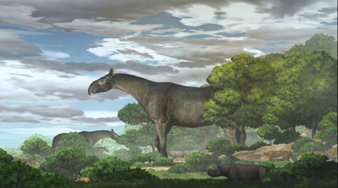 中美合作團隊於甘肅臨夏盆地發現巨犀的一個新屬種臨夏巨犀。圖/取自澎湃新聞