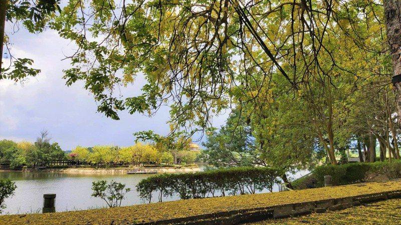 虎頭埤風景區6月阿勃勒盛開,因防疫3級警戒花季取消,改推線上觀看。圖/虎頭埤風景區提供