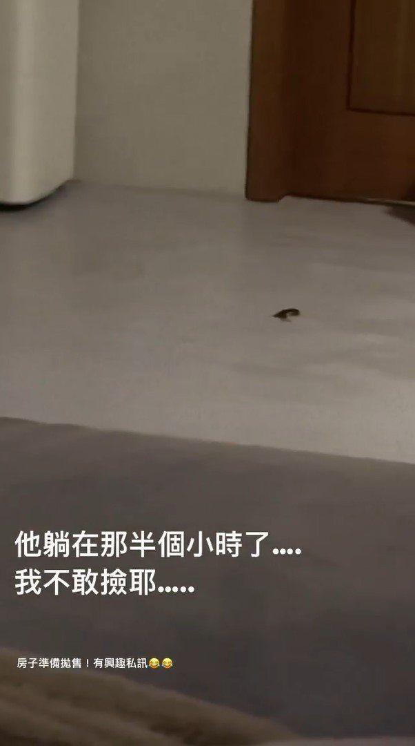 柯震東發現家中出現蟑螂,讓他嚷著要搬家。 圖/擷自柯震東IG