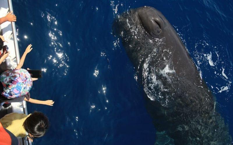 ▲七月份旅遊活動推薦-多羅滿賞鯨。 (圖/Tripbaa趣吧!旅遊平台)