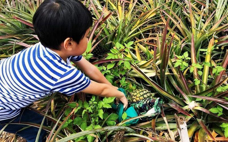 ▲七月份旅遊活動推薦-親子農村採果體驗。 (圖/Tripbaa趣吧!自由行專家)