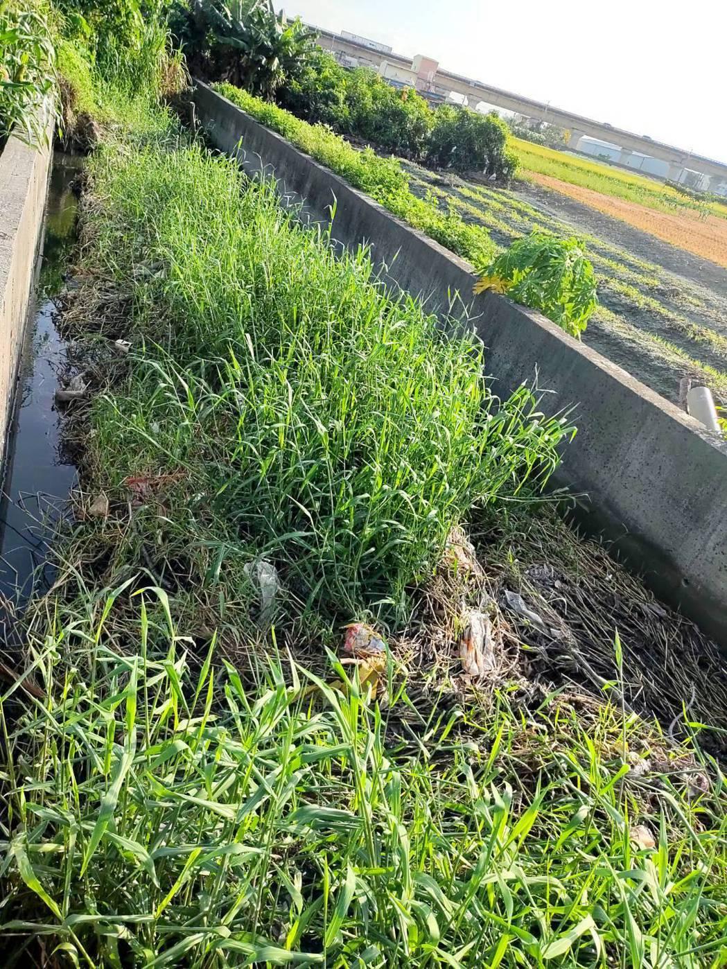埔心鄉二重湳第二排水支線一年半沒清淤,積水已溢出鄰近農地。圖/埔心鄉公所提供