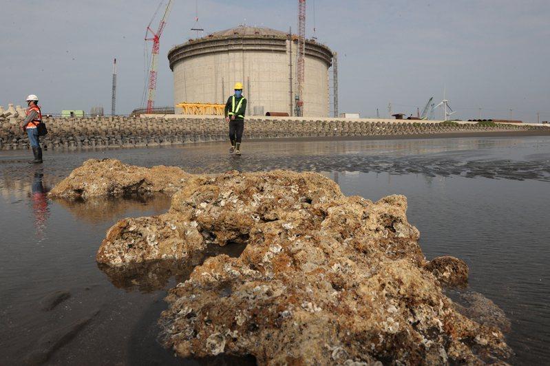 圖為大潭藻礁與施工中的中油天然氣第三接收站。本報資料照片