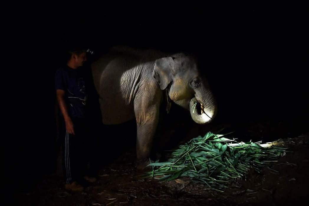 甚至,有些象夫為了生計,只能把大象帶到街邊乞討。與騎象所帶來的壓力不同,騎象至少...