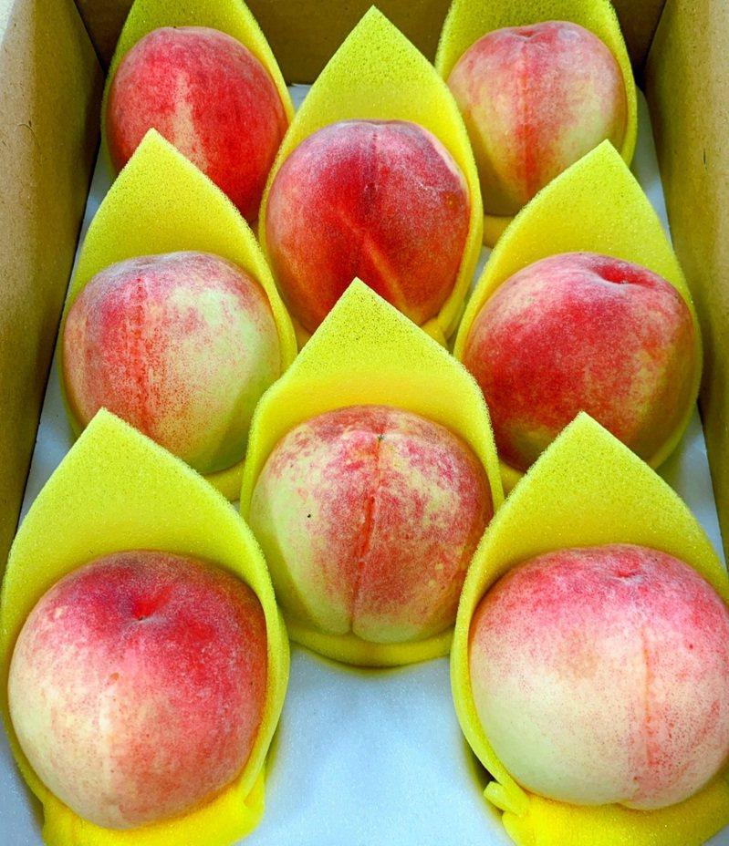 桃園市復興區農會採分級包裝行銷水蜜桃。圖/復興區農會提供
