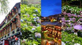 最美的風景是沒有人! 「九份老街&萬里繡球花」現況圖輯 在家旅遊欣賞「疫情中的美景」