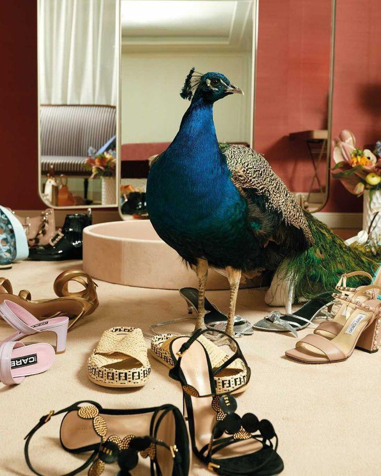 在開幕期間,巴黎莎瑪麗丹百貨以孔雀為視覺拍攝了形象廣告、影片,奇幻、可愛又不失華...