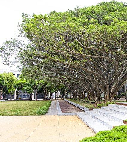 中原大學「泉源之谷」設計案保留完整老榕樹與植物風貌,讓人們與自然和諧共處。 中原...