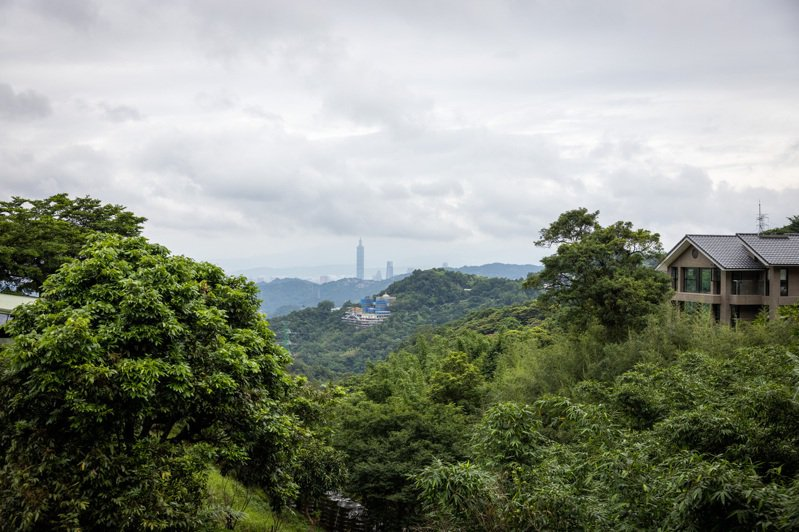 在綠油油的前景陪伴下,遠眺台北101十分愜意。記者沈昱嘉/攝影