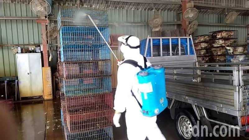動保處人員今天到新北家禽合作社消毒。記者江婉儀/攝影