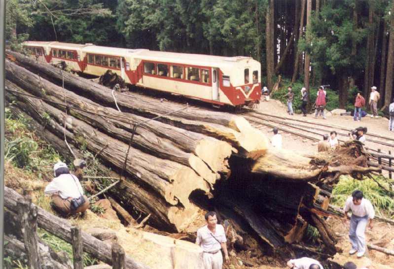 阿里山神木倒下時,正好有一列阿里山客車到神木旁碰壁回頭,神木與森林鐵路客車交會看盡多少歷史興衰。圖/聯合報系資料照片