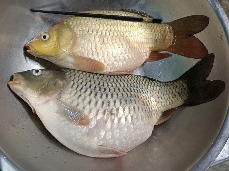 一位女網友表示鄰居送來兩尾魚,不知該如何處理,上網求教網友。圖擷自廚藝公社