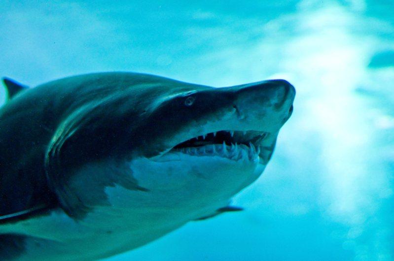 日本岡山縣1920年代挖掘出一具千年男性骸骨,但其死因一直成謎,直到近日英國牛津大學解開疑團,推斷該男子是史上已知的第一位鯊魚襲擊受害者。 示意圖/ingimage