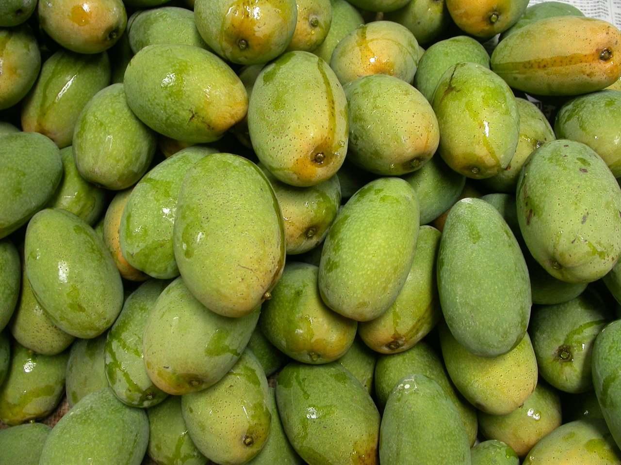 帶給很多人童年回憶的土芒果。 圖/台南區農改場提供