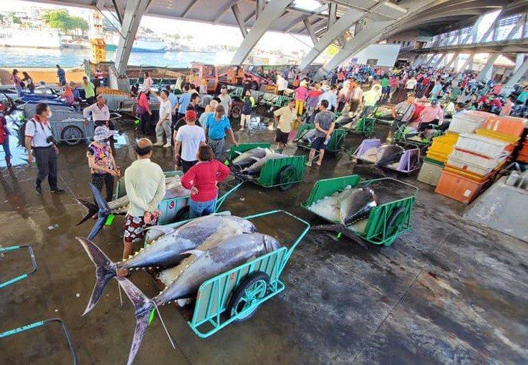 屏東縣東港漁港前3個月共釣獲4367尾黑鮪,創13年來新高,但受疫情影響價格大跌,漁民感受不到豐收的喜悅。圖/東港區漁會提供