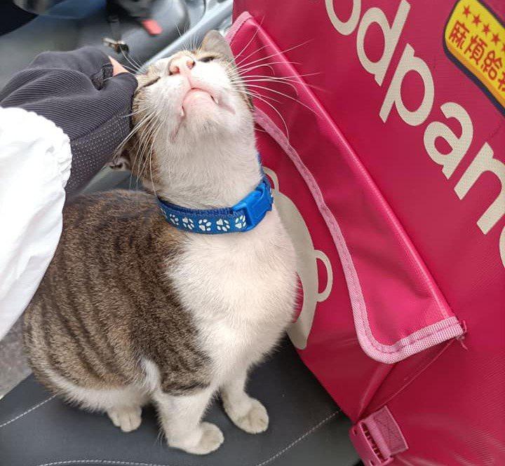 近日一名外送員發文分享在跟店家取餐完後,走回機車卻發現被「喵星人」霸佔生財工具,貓咪可愛模樣萌翻網友。圖/取自外送員的奇聞怪事