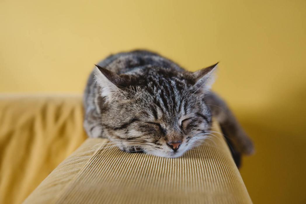 豆類製品剩餘物經過循環經濟的科技變身,也能變成受養貓族歡迎的貓用豆腐砂。 圖/u...