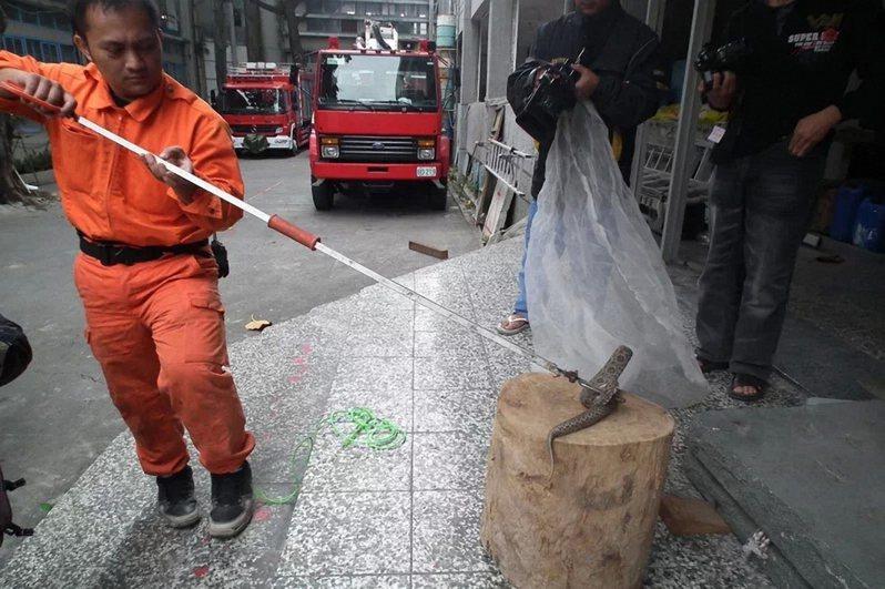 台東縣捕蜂捉蛇業務已發包,日後民眾求助須改打1999,而非119。本報資料照片