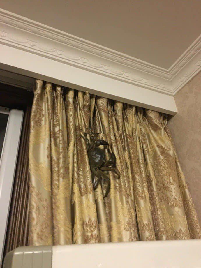 一名網友貼出一張家中照片,圖中可見窗簾上爬著一隻巨大多腳生物,許多網友誤以為是「喇牙」嚇壞。圖/取自爆廢公社公開版