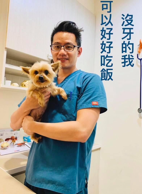 約克夏狗狗「胖打」沒牙仍可以好好進食。圖/取自原典動物醫院臉書