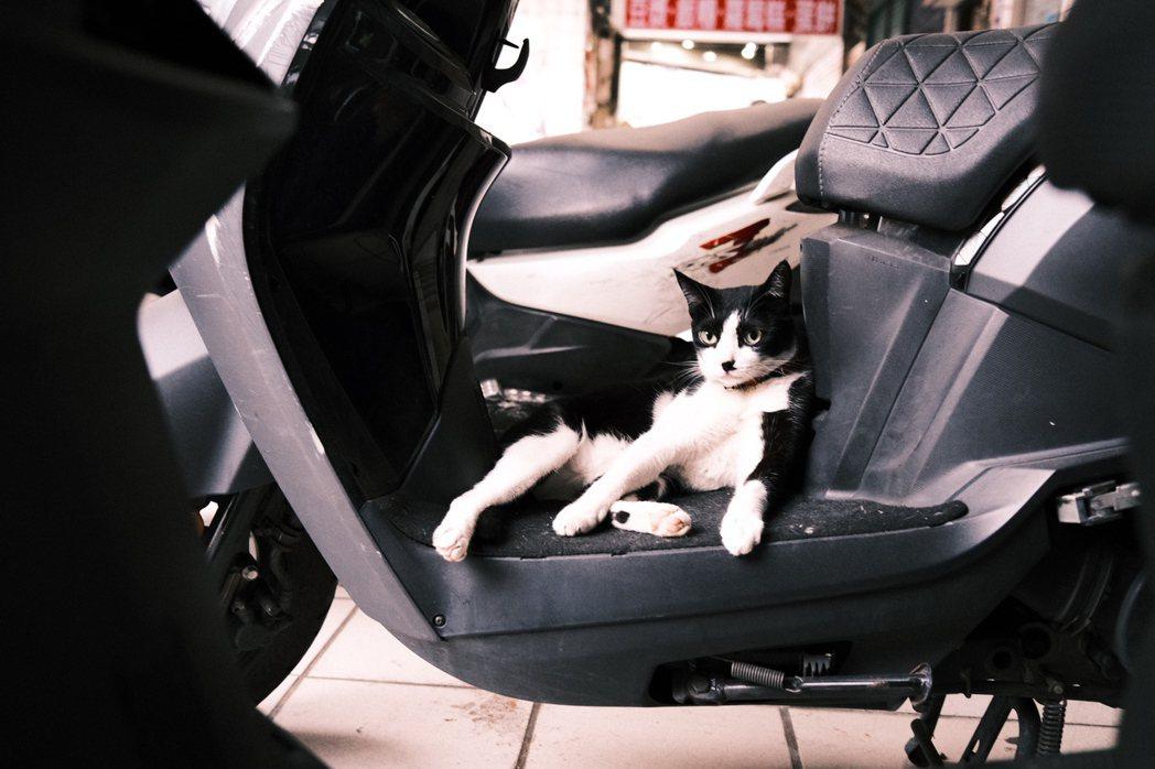 萬華有獨特的老城風景,散步在街上也能被慵懶的貓咪療癒一波。圖/江佩君攝影