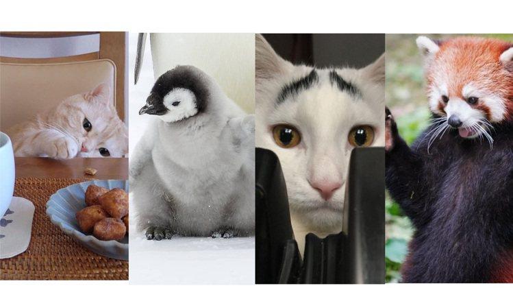 看看可愛動物的IG,疫情期間特別療癒。圖/取自IG