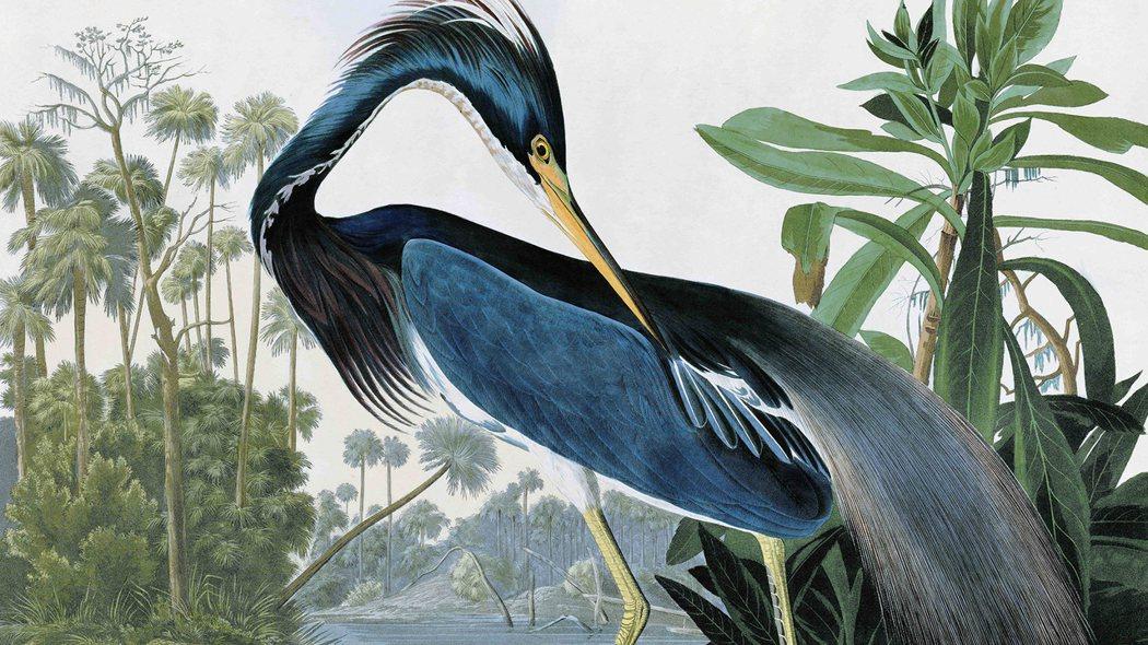 《美國鳥類》劇照。圖/鹿特丹影展 提供