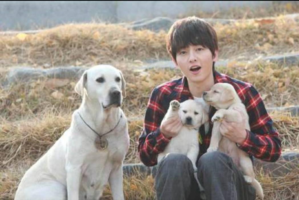 宋仲基2010年首次主演電影就是跟他最怕的狗合作。圖/翻攝自friDay影音