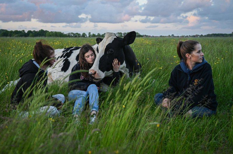 德國布滕蘭牧場現在收容其他牧場送來的動物,但候補名單很長。圖為21歲女孩柏寧(中)和姐妹,在牧場中陪伴她們送去的乳牛艾莉。紐約時報