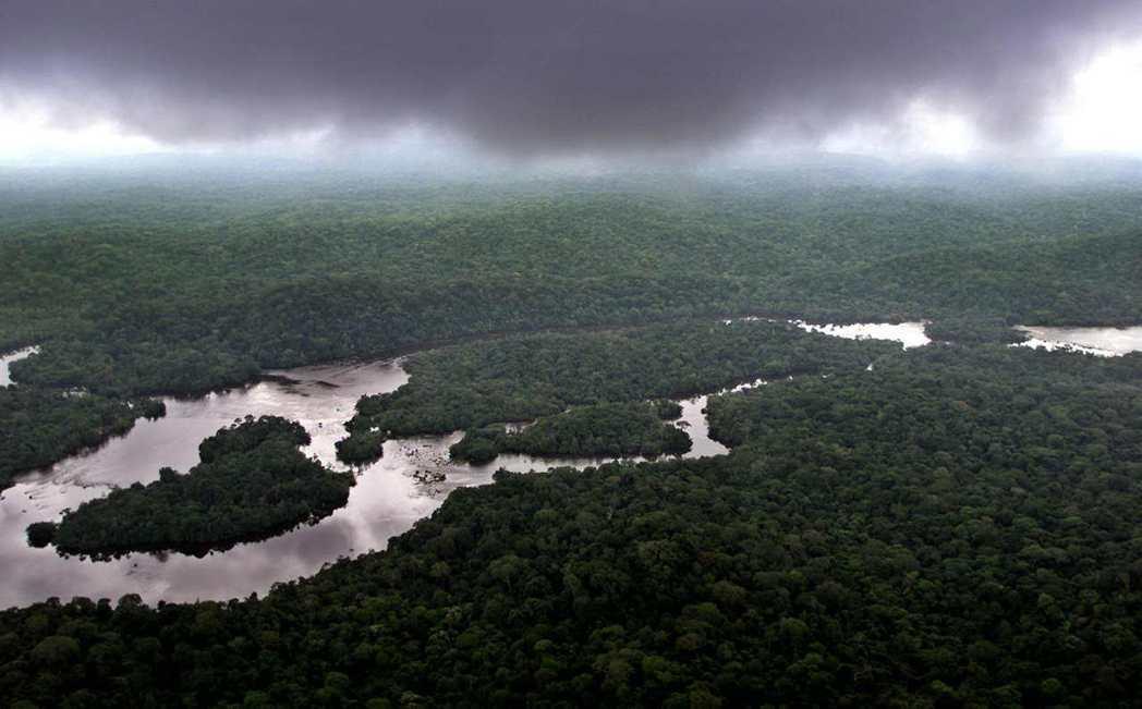 加彭是世界上森林覆蓋面積第二大的國家,環境部長懷特希望將一部分的樹轉化為收入來源...
