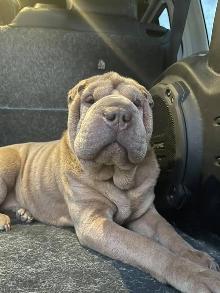 男子找回他的狗,還承諾為偷他狗的女賊付戒毒費用。圖/取自facebook@Brayden Morton
